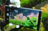 与鱼儿零距离 荣耀Magic3 Pro水下拍摄图片