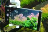与鱼儿零距离 荣耀Magic3 Pro水下拍摄