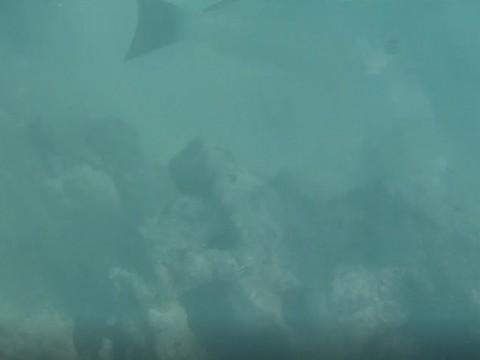 JVC:水下拍摄