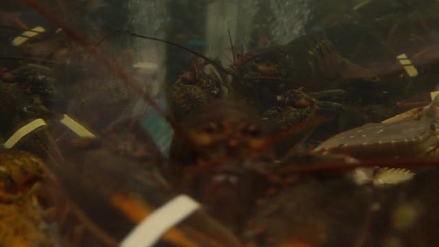 科技早报:特别篇 一次有趣的抓虾体验